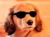 ClarisseDS - éleveur canin Dogzer