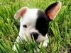 alicedu07 - éleveur canin Dogzer