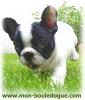 POPO2212 - éleveur canin Dogzer