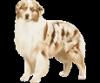 vivilapuce - éleveur canin Dogzer