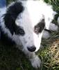 Delyce69 - éleveur canin Dogzer