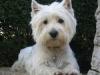laperledu61 - éleveur canin Dogzer