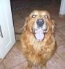 eve240401 - éleveur canin Dogzer