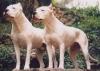 didimooo - éleveur canin Dogzer