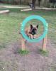 priss77 - éleveur canin Dogzer
