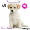 amouraustralien - éleveur canin Dogzer