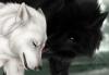 aruna - éleveur canin Dogzer