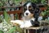 herra006 - éleveur canin Dogzer