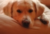 valerie78 - éleveur canin Dogzer