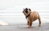 LaPaixdanslemonde - éleveur canin Dogzer