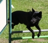 alabama - éleveur canin Dogzer
