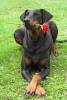 Dob555 - éleveur canin Dogzer