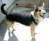 nikolas76320 - éleveur canin Dogzer