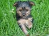 hello62 - éleveur canin Dogzer