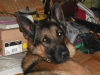 TLS33 - éleveur canin Dogzer