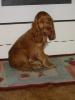 popo103 - éleveur canin Dogzer