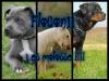flocon11 - éleveur canin Dogzer