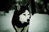 jennyffer22120 - éleveur canin Dogzer