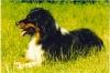 crystal2 - éleveur canin Dogzer