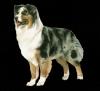 mamapopo2 - éleveur canin Dogzer