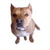 AkitaLOD - éleveur canin Dogzer