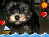 excalibur234 - éleveur canin Dogzer