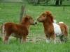 Marguerite2002 - éleveur canin Dogzer