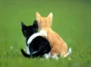 MonEspoir - éleveur canin Dogzer
