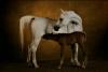 shadok1 - éleveur canin Dogzer