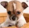 miamibeach - éleveur canin Dogzer