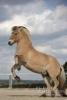 Major Powwow - éleveur canin Dogzer