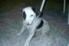 alexduv - éleveur canin Dogzer