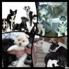 karen06 - éleveur canin Dogzer