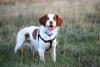 poponemo - éleveur canin Dogzer