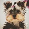 gigazelle - éleveur canin Dogzer