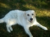 titi441 - éleveur canin Dogzer