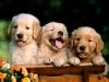 ora12 - éleveur canin Dogzer