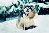 Hermosa13 - éleveur canin Dogzer