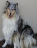 excel35 - éleveur canin Dogzer