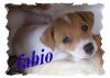 alex7575 - éleveur canin Dogzer