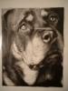 Sothis - éleveur canin Dogzer
