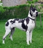 belle56330 - éleveur canin Dogzer