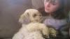 tite-po - éleveur canin Dogzer