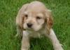 caramel1807 - éleveur canin Dogzer