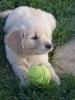 sarhra - éleveur canin Dogzer