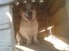 ifalna - éleveur canin Dogzer