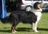 richard1789 - éleveur canin Dogzer