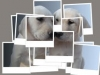 vava72 - éleveur canin Dogzer