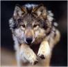 Djabrana - éleveur canin Dogzer
