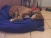 JessLoli - éleveur canin Dogzer